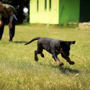 curso etologia canina