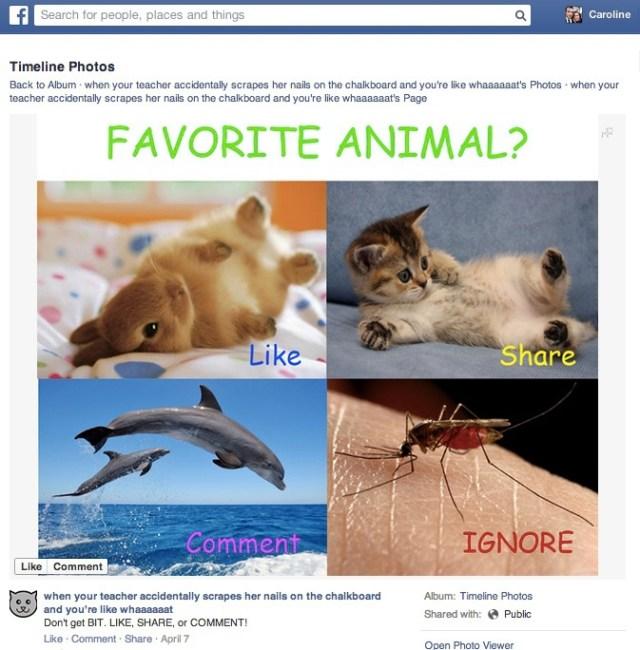 Este tipo de publicação também deve aparecer menos no Facebook