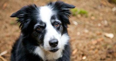 Logo mais você poderá se comunicar com seu cachorro graças à inteligência artificial