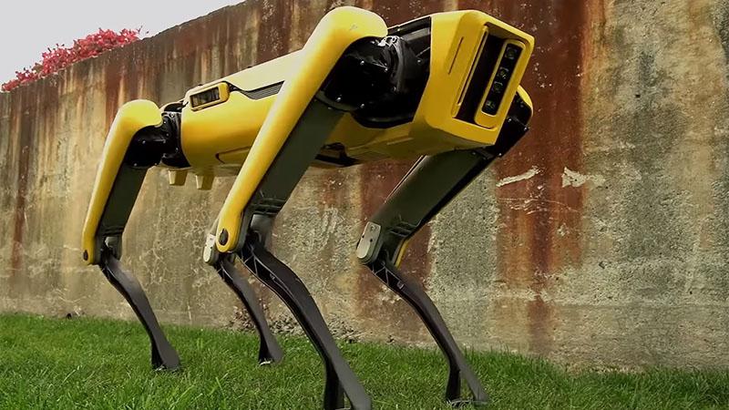 Cão robô da Boston Dynamics já está a venda