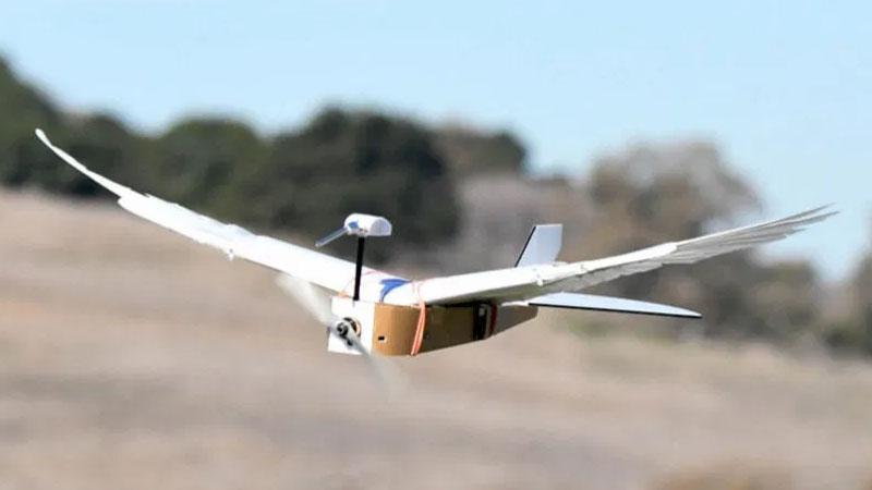 Drone em formato de passáro dobra asas para se locomover rapidamente