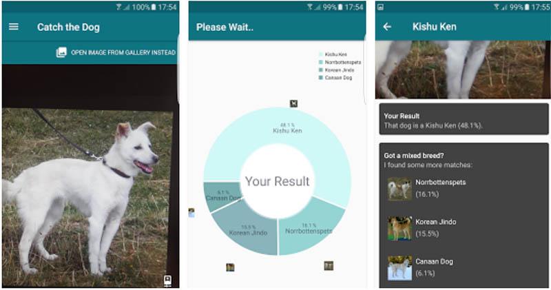 2 apps que usan la cámara de tu teléfono para identificar razas de perros