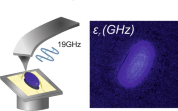 Imagen de cómo la microscopía de barrido de microondas mide la permitividad eléctrica de un objeto biológico a escala nanométrica. / IBEC