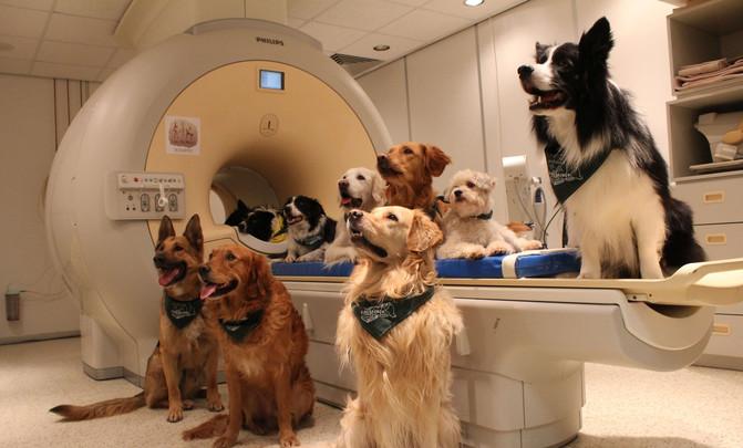 Los 13 perros entrenados a lo que se le realizó una resonancia magnética para el estudio. / Enikő Kubinyi