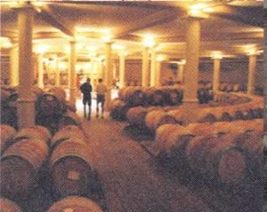 TECTON-Reise 1999