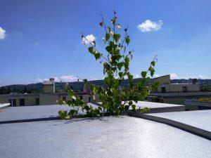 Impressionen aus der TECTON-Foto-Cloud 2021-07