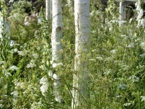chelsea 2014 green white