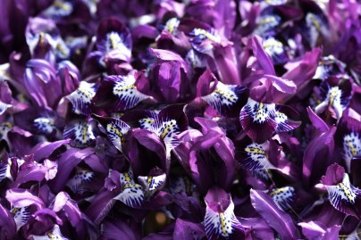 Iris Spot On