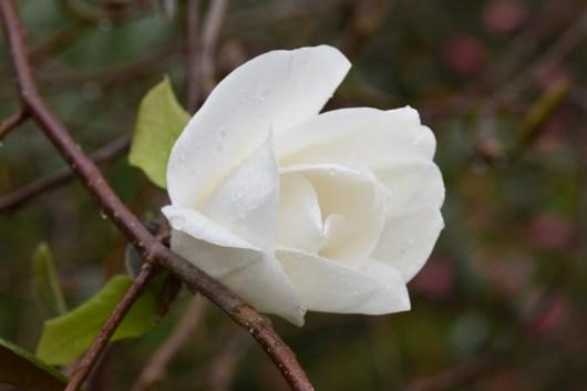 Magnolia Phelan Bright