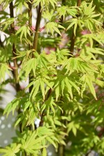 Acer Going Green