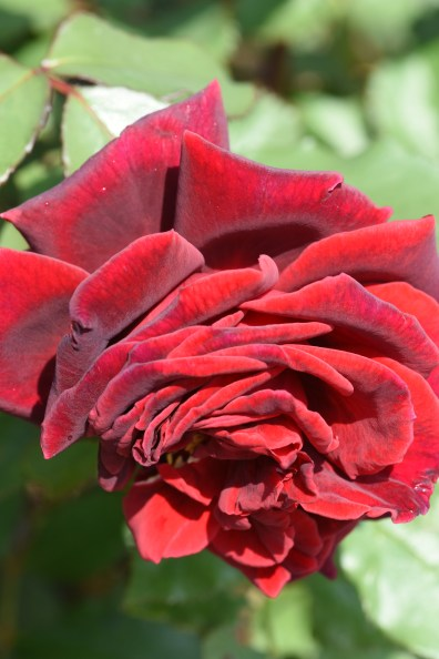 Velvet Fragrance