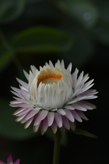 MBO_6611
