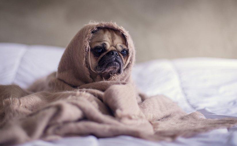 Kuscheltier Hund mit Namen – der beste Freund des Menschen