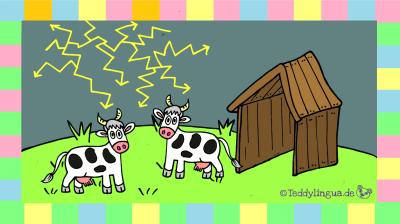 Kühe Gewitter