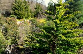 ataturk arboretum