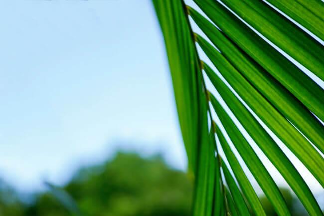 False Expectations - Palm Sunday