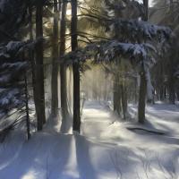 Snow Flurry in Sunglight