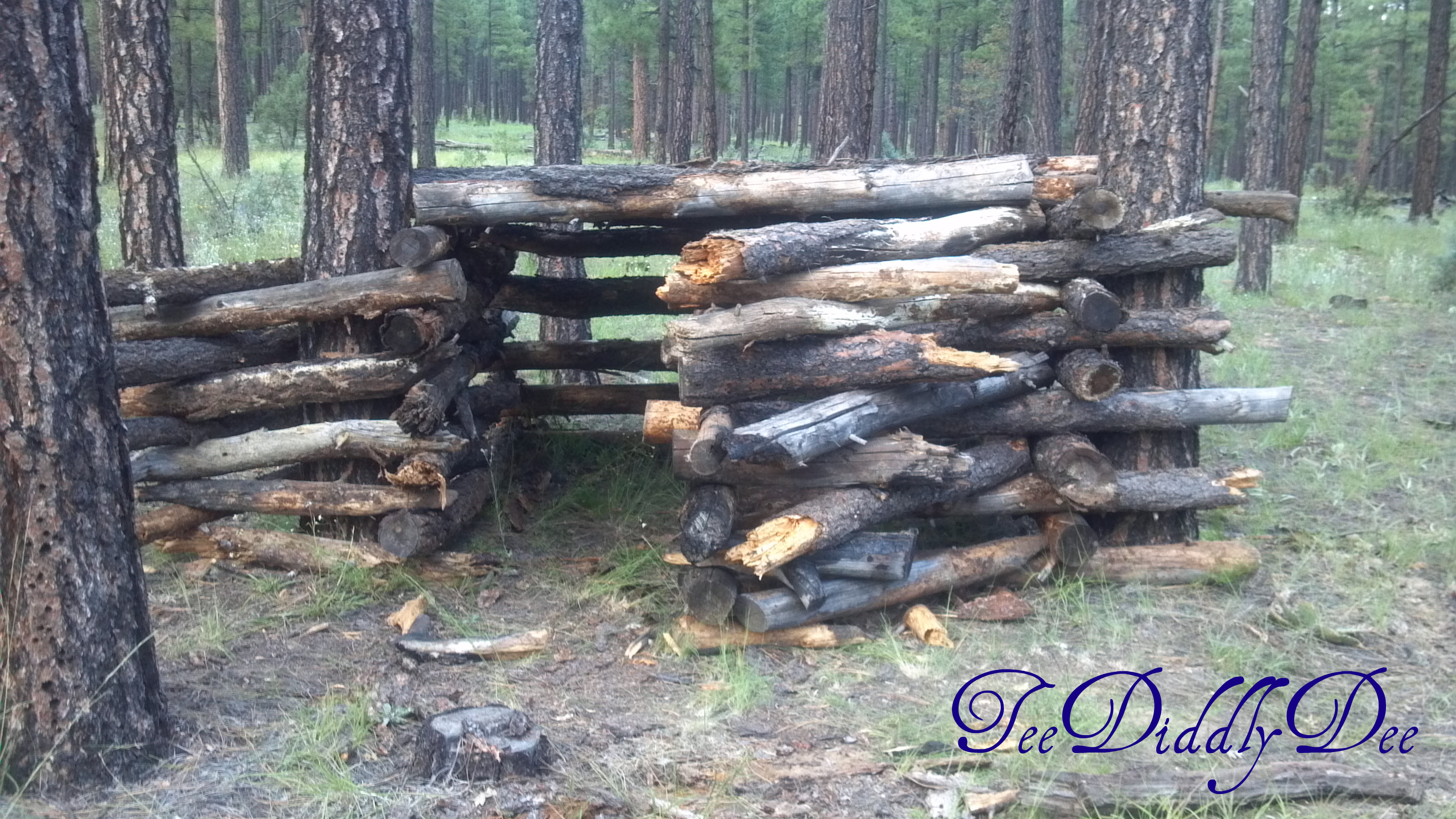 How To Build A Log Fort Or Clubhouse In The Woods
