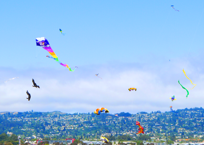 Some of the hundreds of kites flying above the Berkeley Kite festival. Photo by: Avery Trigg