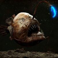 7 най-плашещи океански създания
