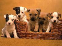 Екип Dogs