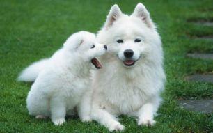 Красиви кучета
