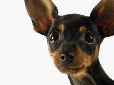 Симпатично куче