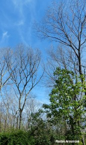 72-Bare-Trees-Summer-Solstice-062116_40