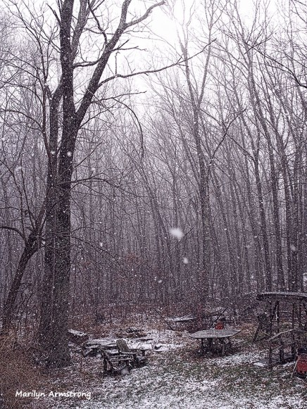 180-tall-woods-snow-flurries-30122016_03