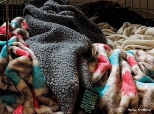 180-bonnies-blankets-042717_010