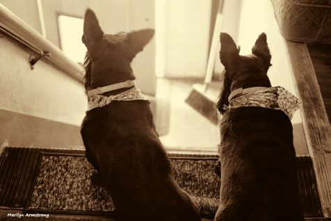 300-bw-stairs-dogs-tub-073016_023