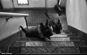 72-bw-stairs-bonnie-gibbs-stairs-072716_29