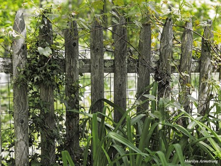 300-picket-fence-mid-may-051817_024