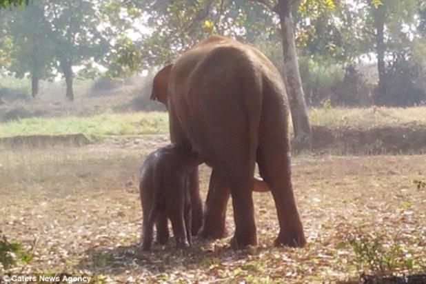 小象掉入水井受困險喪命,象媽媽堅決不離開孩子死守11個小時見證動物的愛!