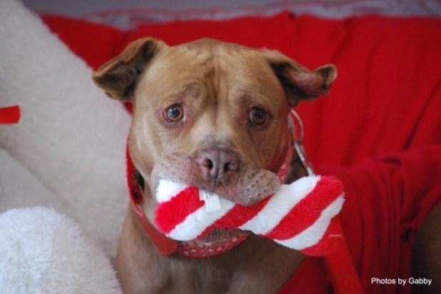 這隻狗狗等了5年都沒有被人領養…於是收容所拍了這張讓全世界都很心疼的照片!