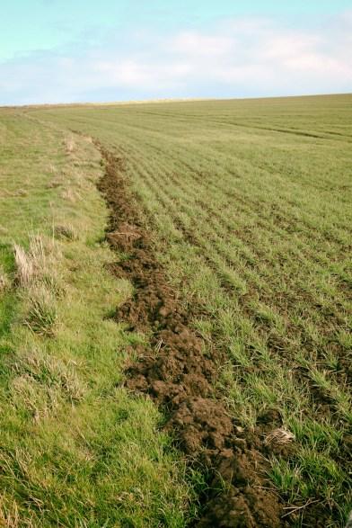 field-margin