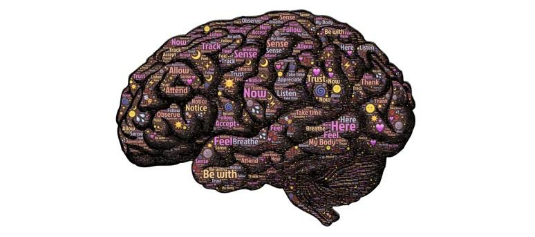 Tee vaikuttaa aivoissa monella eri tavalla, ja yhdessä nämä vaikutukset luovat teen piristävän ja rentouttavan vaikutuksen. Lue lisää!