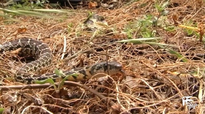 04/05 Les serps han arribat per quedar-se