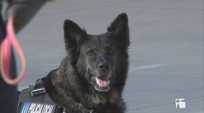 06/10 La Unitat canina de la policia de Sant Antoni fa demostracions als centres educatius