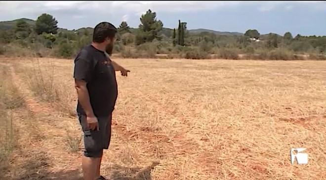 15/07/2019 Li roben la collita de blat