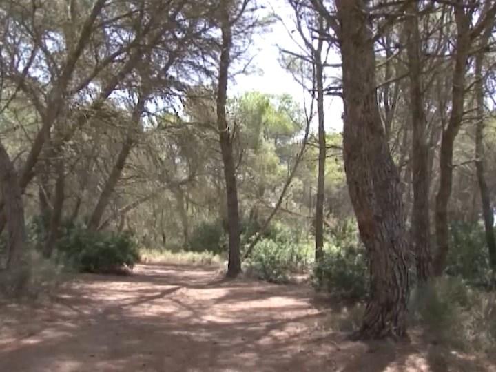 08/07/2020 170.000 euros per estudiar els camins de Formentera