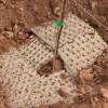 03/03/2021 Innovar per estalviar aigua i fertilitzants