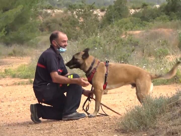 28/05/2021 Així són els entrenaments de la Unitat Canina dels Bombers d'Eivissa