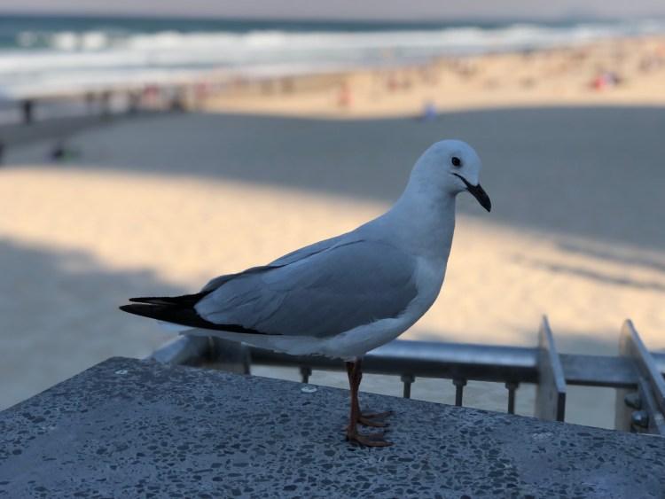 bird at beach