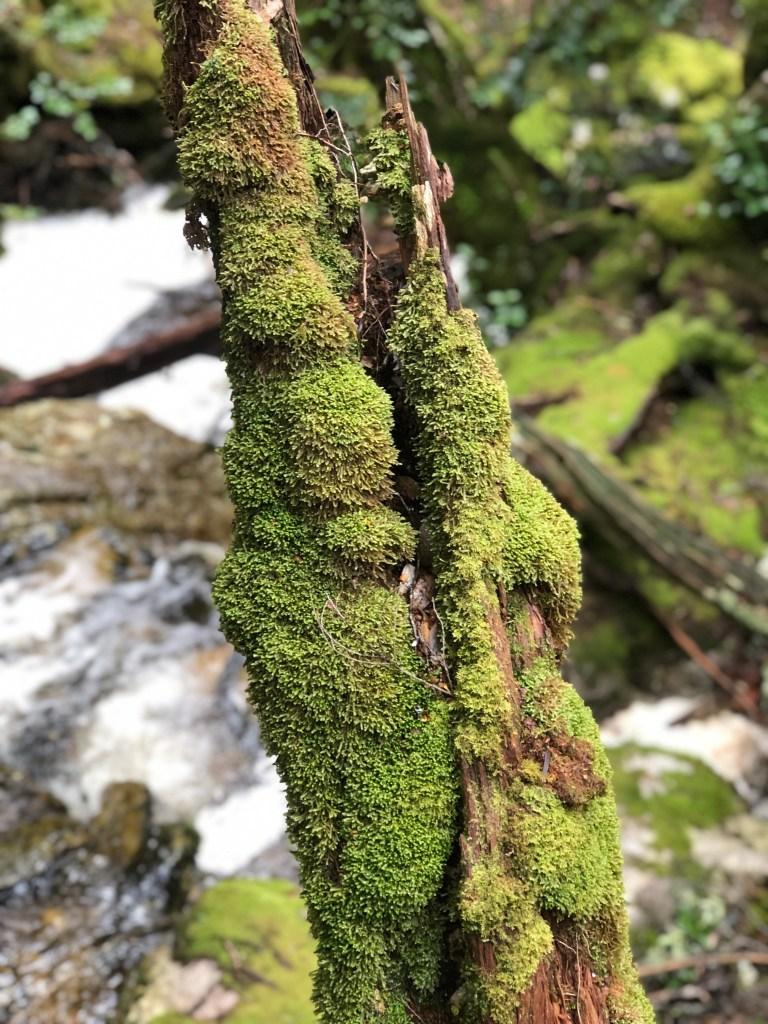 moss on tree log