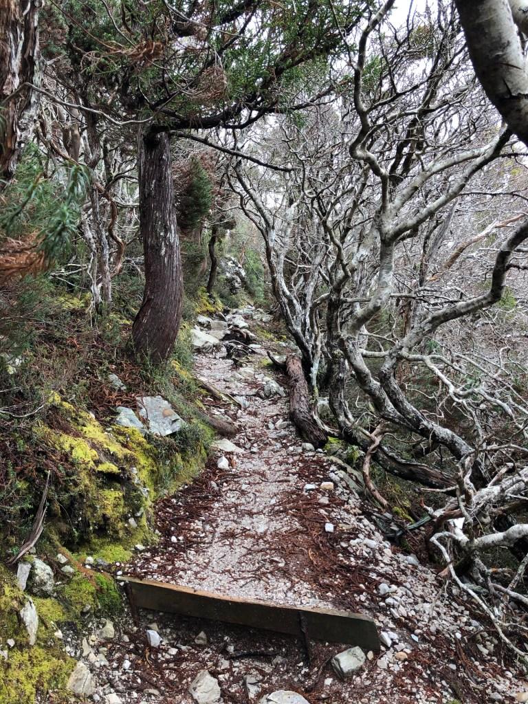 steep hiking path