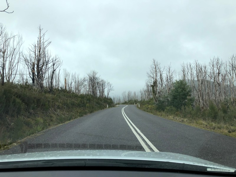 road with leafless trees