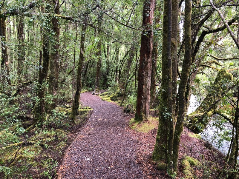 hiking trail through forest