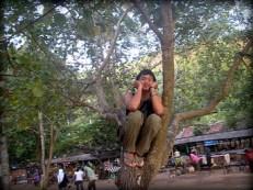 dreamy on a tree