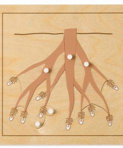 Botany puzzle: root - Nienhuis Montessori